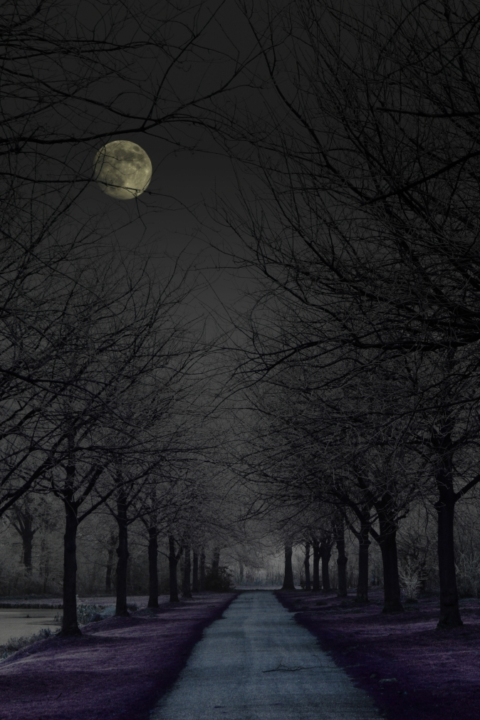 4054001-dark-forest-road-with-moon